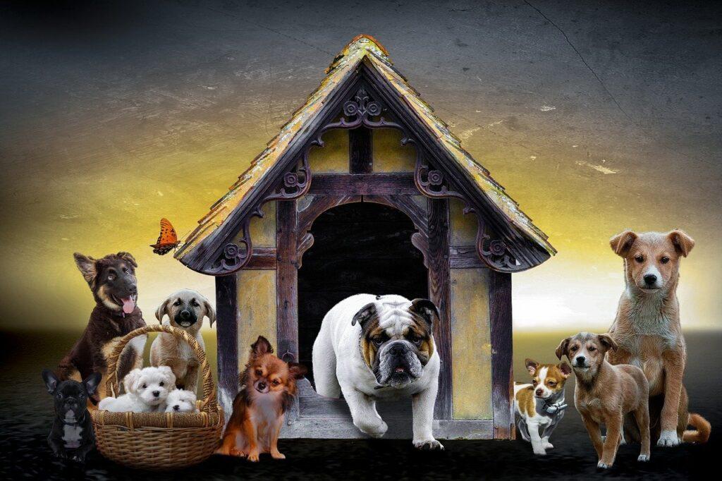 animals, dogs, puppies-2622242.jpg