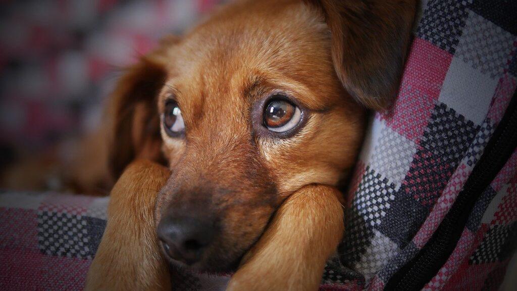dog, cute, animal-3071334.jpg